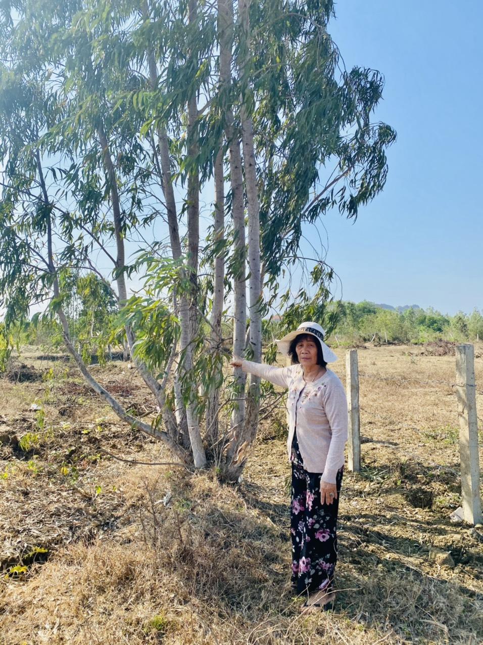 Bà Cúc chỉ cây trồng lâu năm trên đất để làm ranh đất hiện nay vẫn còn tồn tại
